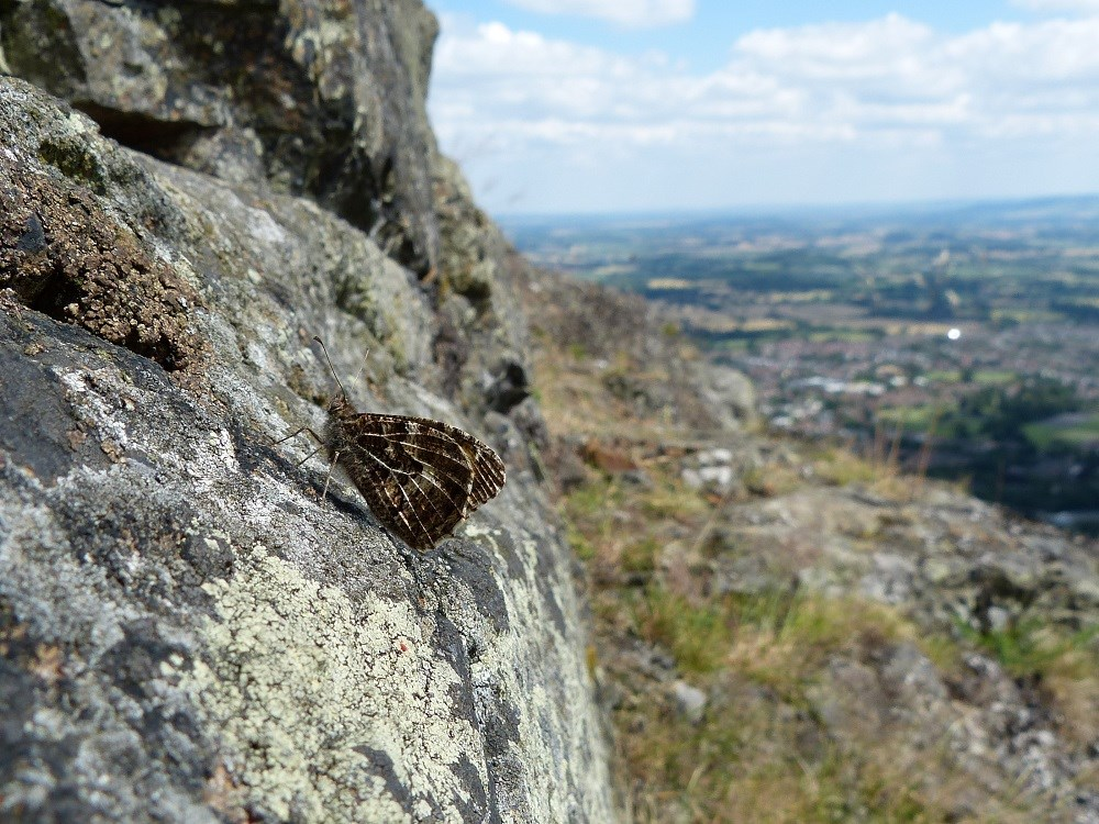 Grayling North Hill 2 (c) Mel Mason website.jpg