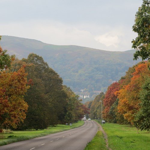 Trees Autumn Guarlford Road low res.jpg