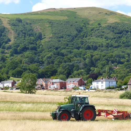 Malvern Common hay cut 032 31.07.2015 low res.jpg