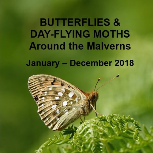 2019.02.21 Butterflies and moths.jpg